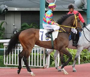 Super Jockey