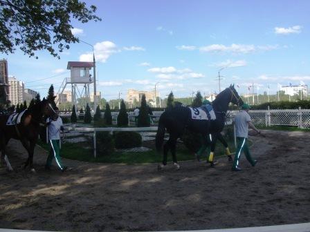 Кемеровский и Девкалион перед скачкой