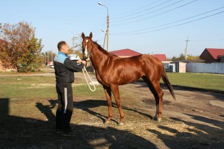 Победитель Большого Приза на Ростовском ипподроме