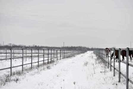 паддоки конного завода зимой