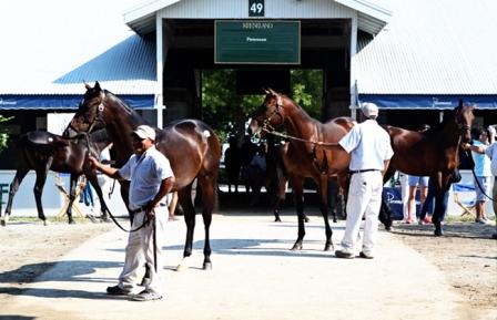 Лошади перед торгами