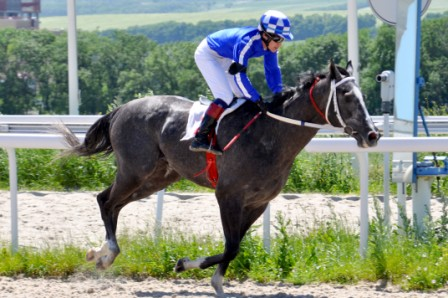 жеребец занял второе место в Дерби 2013 в Пятигорске