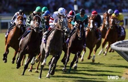 гладкие скачки лошадей чистокровной верховой породы