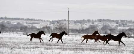 что принесет нам год лошади