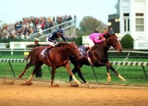 борьба лошадей в скачке