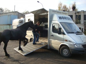 пепевозка лошадей