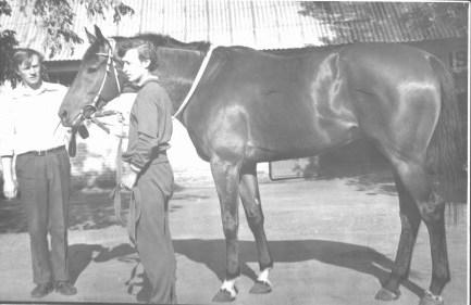 Тренер скаковых лошадей А.П.Белозеров, жокей А Чугуевец и Суздаль