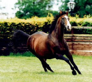 Sadler's Wells sire