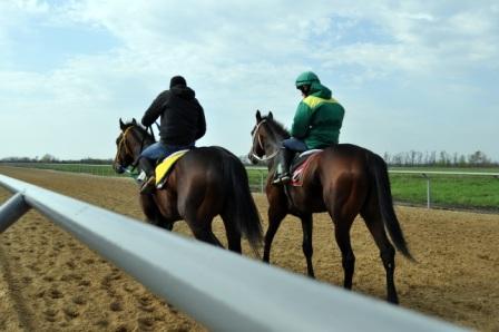 лошади агрофирмы Прогресс на тренировке
