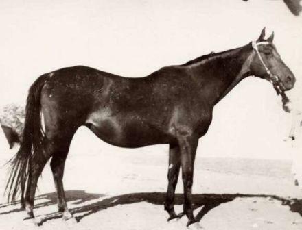 Кобыла Арагва