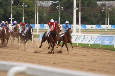 Дерби 2014, лошади на дистанции