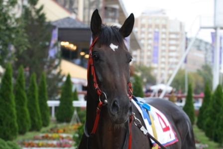 Участник Большого приза для лошадей 2-х лет
