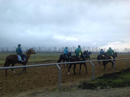 Лошади на проездке