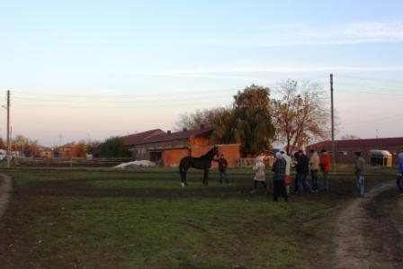 Осмотр лошадей перед скачками