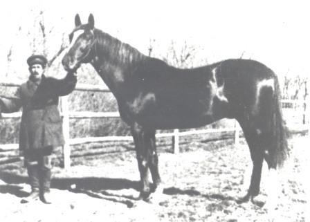 Жеребец Бримстон основатель линии в СССР