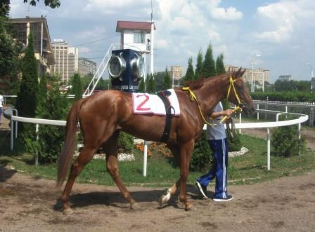 Кобыла Жибек -третье место в Летнем призе
