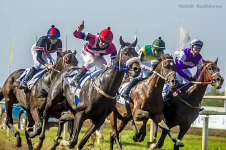 Лошади в Краснодаре
