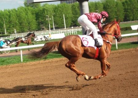 чемпион арабов