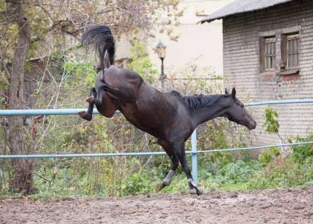 Что делать с коневодством