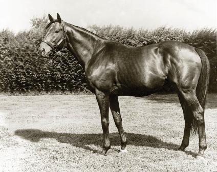 лошадь года 1955
