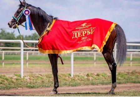 Победитель Дерби в Нальчике